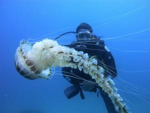 plonge-gosier